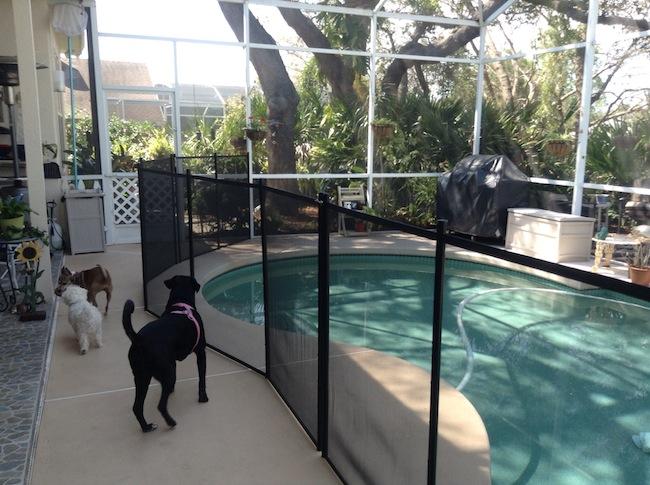 safety pool fence. 8 Lake Mary Pool Safety Fence